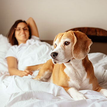 Is Norfolk Lodge & Suites pet-friendly?